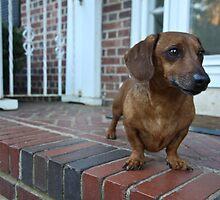 oscar the weenie dog by eelsblueEllen