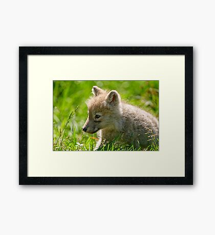 Just smelling the flowers _ Arctic Wolf Pup Framed Print