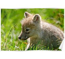 Just smelling the flowers _ Arctic Wolf Pup Poster