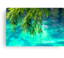 Cypress Leaves Canvas Print