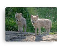 Arctic Wolf Pups  Metal Print