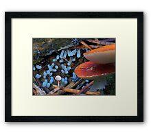 RedBlueWhite Fungi Fantasy Framed Print