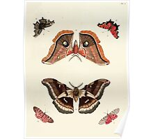 Exotic butterflies of the three parts of the world Pieter Cramer and Caspar Stoll 1782 V1 0079 Poster