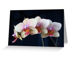 Phalaenopsis (Phal.) hybrid Greeting Card