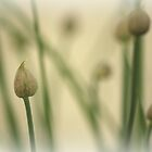 O Sweet Chive Buds! by Kelly Chiara