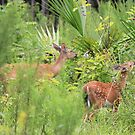 Mom With Her Baby Fawn by kevint