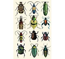 Jeweled Beetles Photographic Print