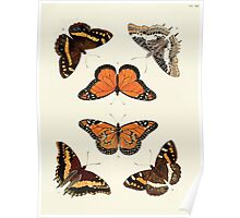 Exotic butterflies of the three parts of the world Pieter Cramer and Caspar Stoll 1782 V1 0071 Poster