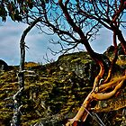Arbutus - Tree of Lasqueti Island by Delilah Rayne