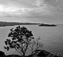 Black and White - Tree of Lasqueti Island by Delilah Rayne