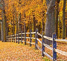 FENCE IN THE GOLDEN WOOD by pshootermike