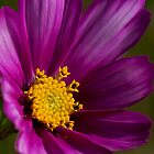 Flower in a flower by Jim Butera