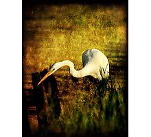 Bayou Hunt Photographic Print