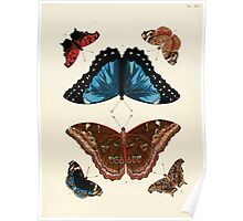 Exotic butterflies of the three parts of the world Pieter Cramer and Caspar Stoll 1782 V1 0126 Poster