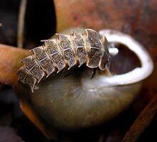 Snail Hunter by Carla Wick/Jandelle Petters