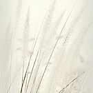 Milky Moon Grass by Kelly Chiara