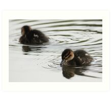 Duck pond Art Print