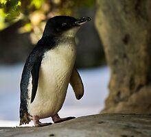 Pingu by Alexander Asbury