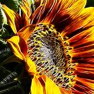 Fractalius Sunflower VI by B.L. Thorvilson