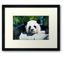 Yes I'm a Drooling Panda Framed Print