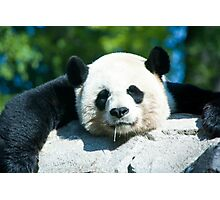 Yes I'm a Drooling Panda Photographic Print