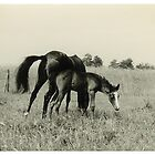 Oldskool Horse Named Quickstep 1959 by AnnoNiem Anno1973