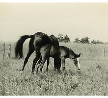 Oldskool Horse Named Quickstep 1959 by AnnoNiem