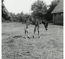 Oldskool Pony Named Rumba 1961 by AnnoNiem