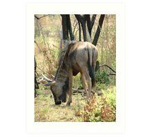 Wildebeest rump Art Print