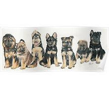 German Shepherd Puppies Poster