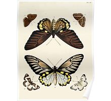 Exotic butterflies of the three parts of the world Pieter Cramer and Caspar Stoll 1782 V1 0099 Poster
