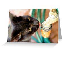 Tobias prefers tap water Greeting Card