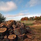 -Firewood - Sebago,  Maine by T.J. Martin
