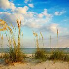 Sea Oats along the Beach by Jonicool
