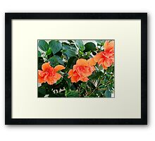 MY PEACH COLORED WORLD Framed Print