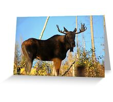 Fall Bull Moose  Greeting Card