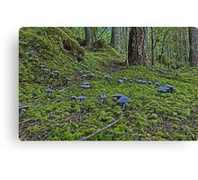 Fairy Ring Canvas Print