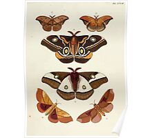 Exotic butterflies of the three parts of the world Pieter Cramer and Caspar Stoll 1782 V4 0059 Poster