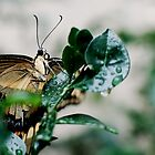 Grounded Butterfly by Nugent Visuality