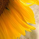 Sunflower Shadows by Zoe Marlowe