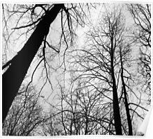 Branches 2 B&W Poster