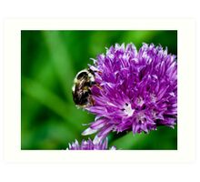 Little Bumble Bee Art Print