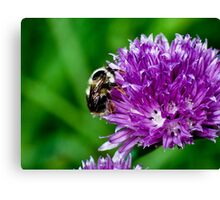 Little Bumble Bee Canvas Print