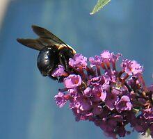 Carpenter bee on butterfly bush flower by CreateArt9