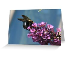 Carpenter bee on butterfly bush flower Greeting Card
