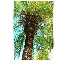 Pretty Palm View Poster