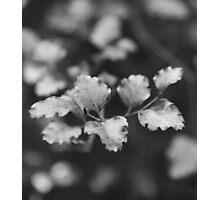 Beech Photographic Print