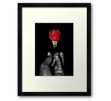 rose emerging Framed Print