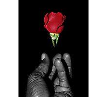 rose emerging Photographic Print