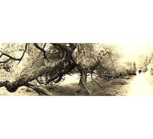 Golden Gate Park- SFO Photographic Print